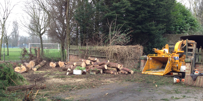 Site Clearance of Leylandii trees